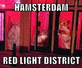 HAMSTERDAM  RED LIGHT DISTRICT