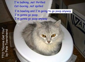 """Litter Box Woes"" (TTO ""Gonna Get You"" by Pete Townshend)"