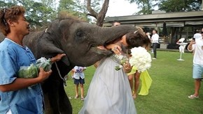 Elephants Are Terrible Wedding Guests
