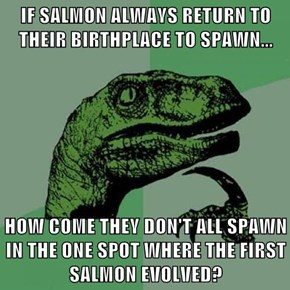 IF SALMON ALWAYS RETURN TO THEIR BIRTHPLACE TO SPAWN...  HOW COME THEY DON'T ALL SPAWN IN THE ONE SPOT WHERE THE FIRST SALMON EVOLVED?