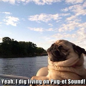 Yeah, I dig living on Pug-et Sound!
