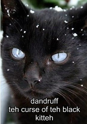 dandruff teh curse of teh black kitteh