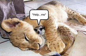 *Help...me*