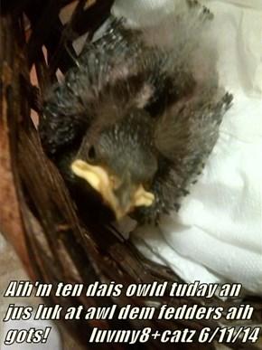 Aih'm ten dais owld tuday an jus luk at awl dem fedders aih gots!           luvmy8+catz 6/11/14