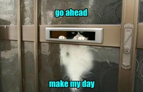 Dirty Harry Cat Has Been Waiting For You