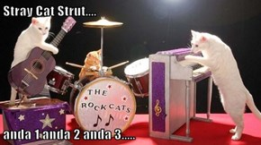 Stray Cat Strut....  anda 1 anda 2 anda 3.....