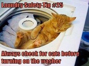 Laundry Safety Tip #25  Always check for cats before turning on the washer