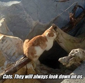 Cats. They will always look down on us.