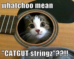 "whatchoo mean  ""CATGUT stringz""??!!"