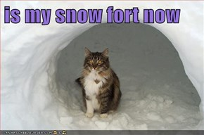 is my snow fort now