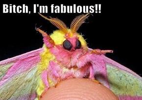 b*tch, I'm fabulous!!