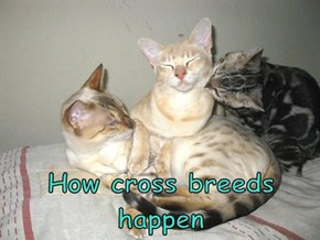 How cross breeds happen