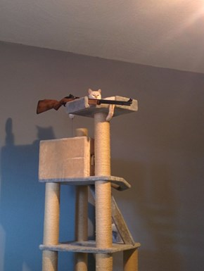 I Never Should Have Gotten My Cat a Watch Tower