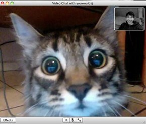 This guy got to Skype with his kitteh after months of being apart. This is his kitteh after seeing and listening to his person...