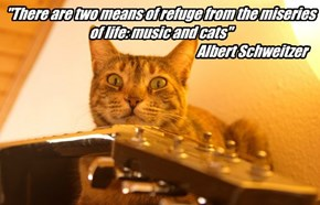 """There are two means of refuge from the miseries of life: music and cats""                                                                     Albert Schweitzer"
