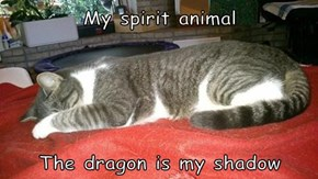 My spirit animal   The dragon is my shadow