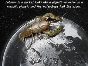 All Hail Our Crustacean Overlords