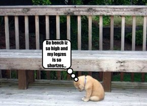 Da bench iz so high and my legzes is so shortzes...