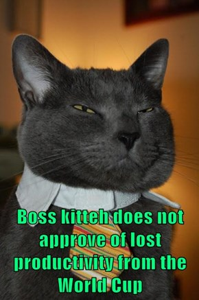 Boss kitteh does not approve of lost productivity from the World Cup