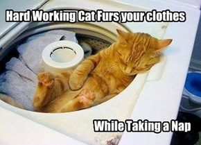 Efficient Kitteh is efficient