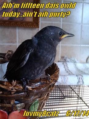 Aih'm fiffteen dais owld tuday..ain't aih purty?  luvmy8catz     6/17/14