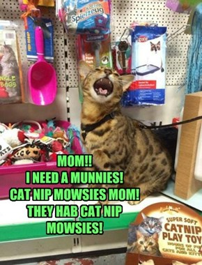 MOM!! I NEED A MUNNIES! CAT NIP MOWSIES MOM! THEY HAB CAT NIP MOWSIES!