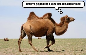 My Humps!  My Humps!  My Lovely Camel Humps!