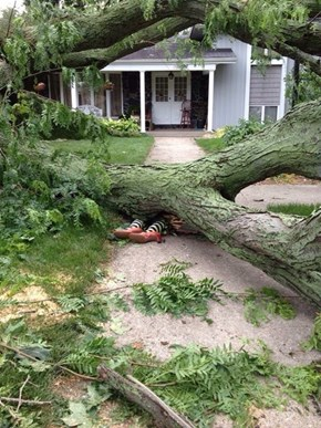 When Life Throws a Felled Tree on Your Lawn, Make the Most of it Right?