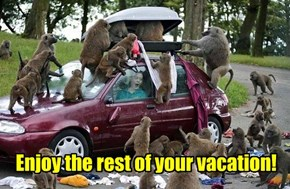 Enjoy the rest of your vacation!
