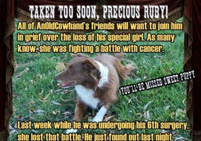 Sad, Horrible News. Deepest Sympathy James. (AOCH). See comments for note from Foxkatt about Ruby's Fund.