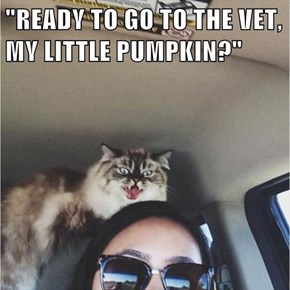 """READY TO GO TO THE VET, MY LITTLE PUMPKIN?"""