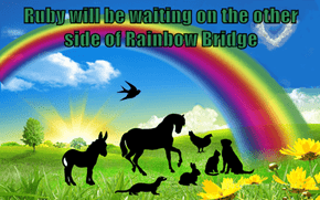 Ruby will be waiting on the other side of Rainbow Bridge