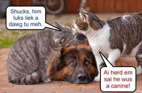 Ai herd em sai he wus a canine!