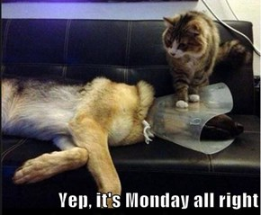 Yep, it's Monday all right