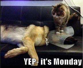 YEP- it's Monday