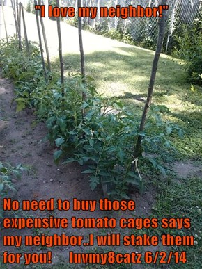"""I love my neighbor!""  No need to buy those expensive tomato cages says my neighbor..I will stake them for you!      luvmy8catz 6/2/14"