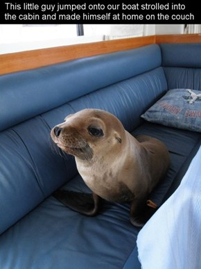 My Ocean, My Boat