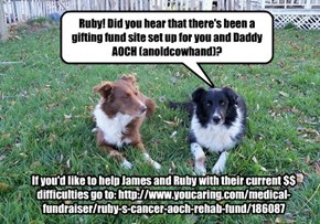 Help out a fellow cheez peep and wonderful friend AnOldCowhand and his girl Ruby. Circumstances have not been kind, Ruby has cancer again and James was just in a bad car accident. If you wish to help, go to: http://www.youcaring.com/medical-fundraiser/rub