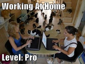 Working At Home  Level: Pro