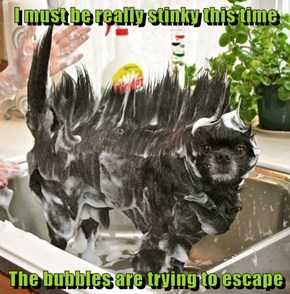 I must be really stinky this time  The bubbles are trying to escape