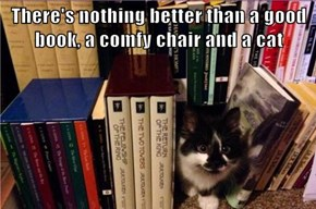 There's nothing better than a good book, a comfy chair and a cat