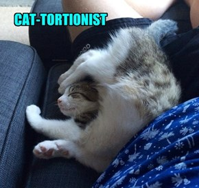 CAT-TORTIONIST