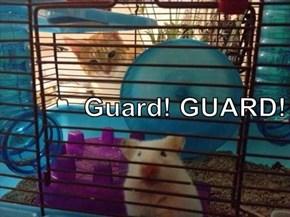 Guard! GUARD!