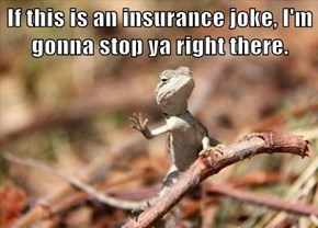 If this is an insurance joke, I'm gonna stop ya right there.
