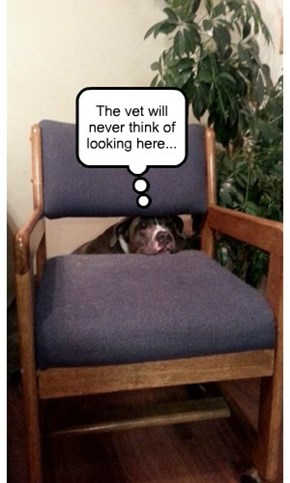 The vet will never think of looking here...