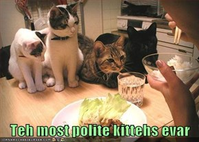 Teh most polite kittehs evar