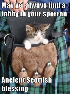 May ye' always find a tabby in your sporran  Ancient Scottish blessing