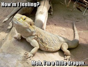 How'm I feeling?  Meh, I'm a little dragon...