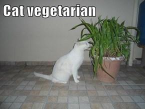 Cat vegetarian
