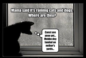 Mama said it's raining cats and dogs.  Where are they?
